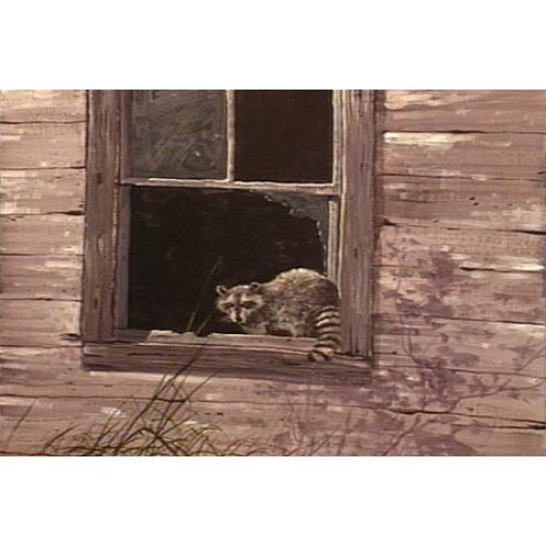 8886 RACCOON IN WINDOW